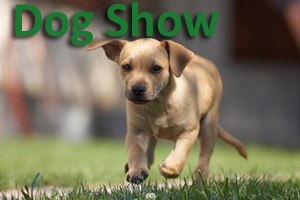 Puppy running through grass - WAAC Dog Show